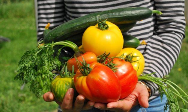 Les fruits et légumes les plus faciles à cultiver