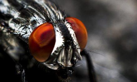 Chasser les mouches de chez soi