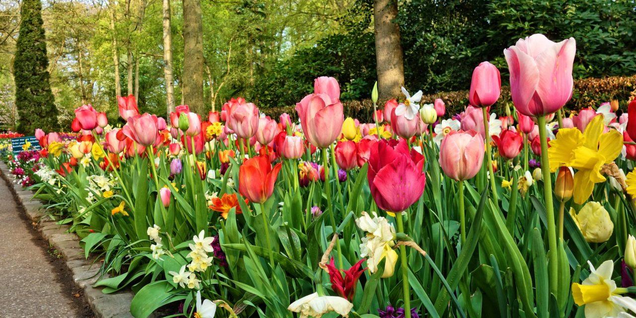 Quelles bordures choisir pour son jardin ?