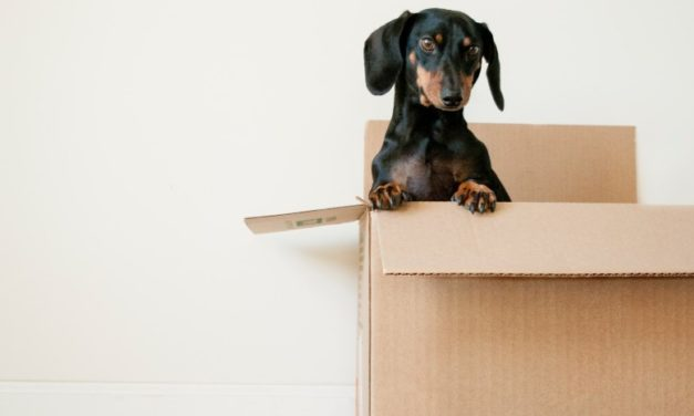 Quelques conseils pour votre emménagement